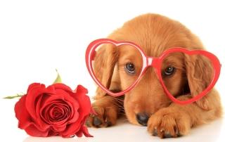 Valentine's Day Eye Health