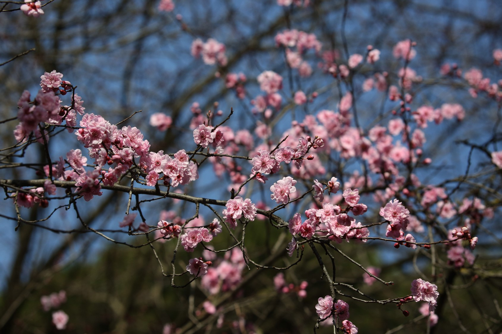 Eye Allergies in Spring