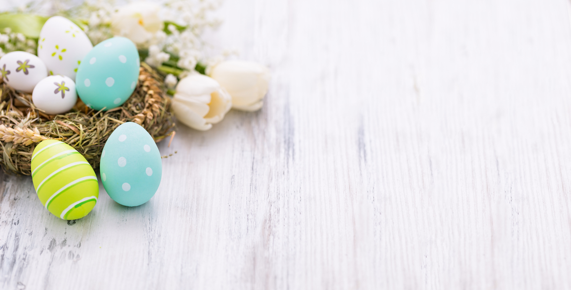 Easter eggs and nest on white background